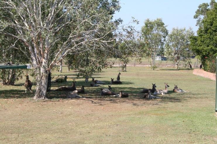 Best Kangaroo takes-176826_10151449364142995_267623145_o.jpg