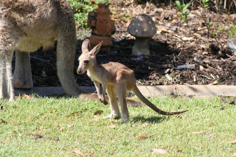 Best Kangaroo takes-53634_10151449357552995_1398578836_o.jpg
