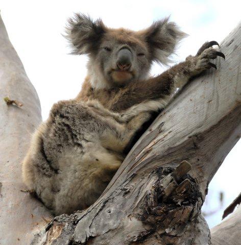 """Just watching the Australian population grow"""